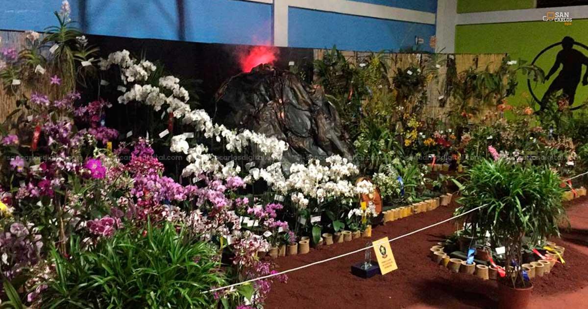 Amantes de las orquídeas tendrán en el cantón Exposición Nacional - San Carlos Digital